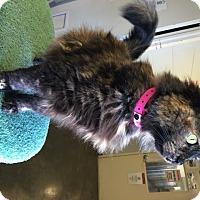 Adopt A Pet :: Mandy - Franklin, NC