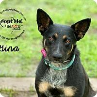 Adopt A Pet :: Gina - Pearland, TX