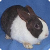 Adopt A Pet :: Veronica - Woburn, MA