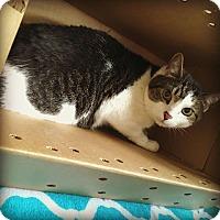 Adopt A Pet :: TIBBIT! - Philadelphia, PA