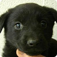 Adopt A Pet :: Mabel - Erwin, TN