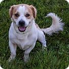 Adopt A Pet :: Nanuk