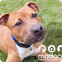 Adopt A Pet :: Mason - Wauwatosa, WI