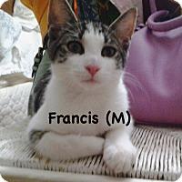 Adopt A Pet :: Francis - West Orange, NJ