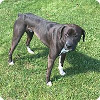 Adopt A Pet :: Brooks - Elgin, IL