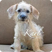 Adopt A Pet :: Karl - San Antonio, TX