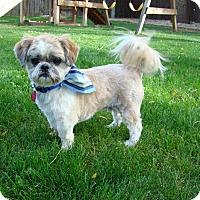 Adopt A Pet :: Dusty - Boise, ID