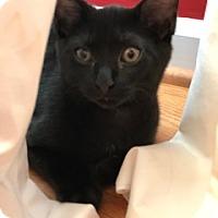 Adopt A Pet :: Leonard - Cincinnati, OH