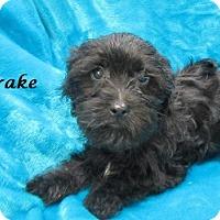 Adopt A Pet :: Drake - Bartonsville, PA