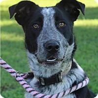 Adopt A Pet :: JUNE BUG - Red Bluff, CA