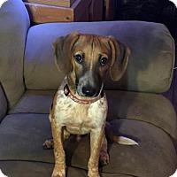 Beagle Mix Dog for adoption in Barnhart, Missouri - Jesse