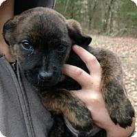 Adopt A Pet :: Beasley - McKinney, TX