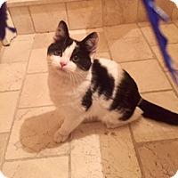Adopt A Pet :: Noelle - Whitestone, NY