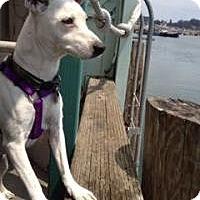 Adopt A Pet :: Odie - Creston, CA