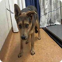 Adopt A Pet :: *RUMOR - Sacramento, CA