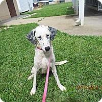 Adopt A Pet :: Dixie - Tampa, FL