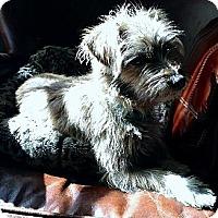 Adopt A Pet :: Hank - Long Beach, CA
