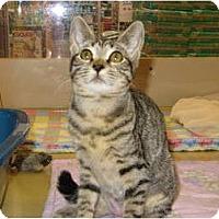 Adopt A Pet :: Mimsy - Modesto, CA