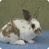 Adopt A Pet :: Emily - Bonita, CA