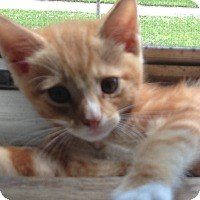 Adopt A Pet :: Six - Long Beach, NY