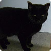 Adopt A Pet :: Winnie - Hamburg, NY