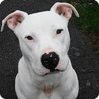 Adopt A Pet :: Finn - Buffalo, NY