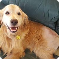 Adopt A Pet :: Sean - Denver, CO