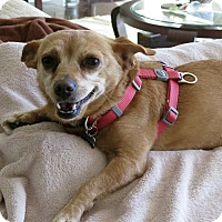 Adopt A Pet :: Chi-Chi-Marie!  VIDEO - Los Angeles, CA