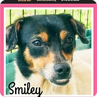 Adopt A Pet :: Smiley - Pensacola, FL