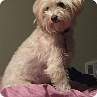 Adopt A Pet :: Cloud - Encino, CA