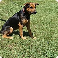Adopt A Pet :: Bullet - Oviedo, FL
