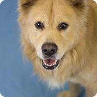 Adopt A Pet :: Hooch - Bradenton, FL