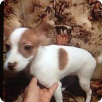 Adopt A Pet :: Hulk - springtown, TX