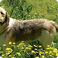 Adopt A Pet :: Bernie - E. Greenwhich, RI