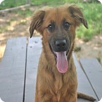 Adopt A Pet :: Cole 1-pending adoption - Manchester, CT