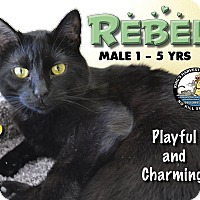 Adopt A Pet :: Rebel - Davenport, IA