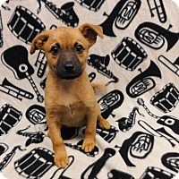 Adopt A Pet :: Wilma-060739j - Tupelo, MS
