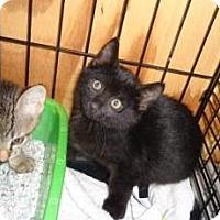 Adopt A Pet :: Dante - Breinigsville, PA
