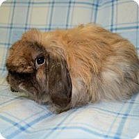 Adopt A Pet :: Whimsey - Chesterfield, MO