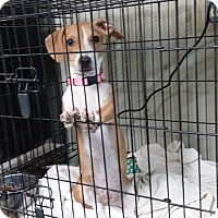 Adopt A Pet :: NOVA - Lubbock, TX