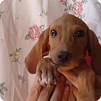 Adopt A Pet :: Rita - Oviedo, FL