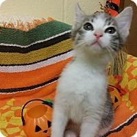 Adopt A Pet :: Striper - Berlin, CT