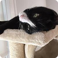 Adopt A Pet :: Emiliyo - Wakefield, MA