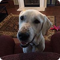 Adopt A Pet :: Tater - Plano, TX
