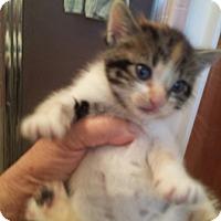 Adopt A Pet :: Sally - Sacramento, CA