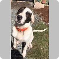 Adopt A Pet :: Otis - Pittsboro, NC