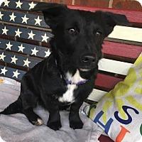 Adopt A Pet :: Dixie - Willingboro, NJ
