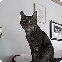 Adopt A Pet :: Baily - Corinth, NY