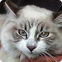 Adopt A Pet :: Matilda - Pasadena, CA