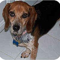 Adopt A Pet :: Josie - Novi, MI